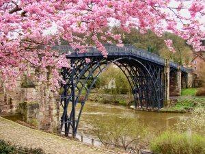 Jake Shimabukuro and Sakura image of cherry blossoms in Japan