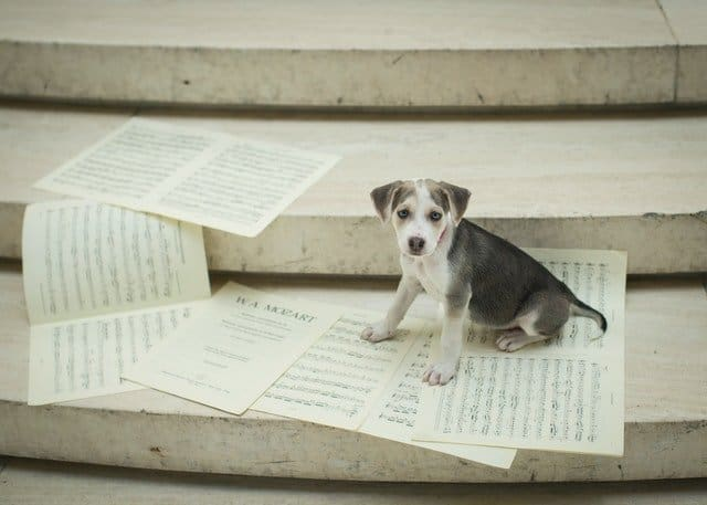 dog with music notes